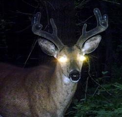buck-velveteen-antlers